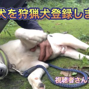 野良犬でもイノシシに通用する猟犬に育てる