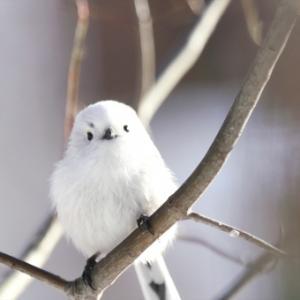 鳥のつぶやき!!鳥たち(ヒヨドリ)の嘆き!!そしてユッコへ!!