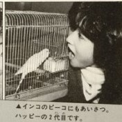 セキセイインコと岡田有希子                                        優しいインコとおばあちゃん
