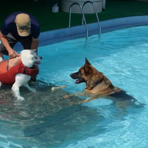 プールでの泳ぎ 慣れてきました!