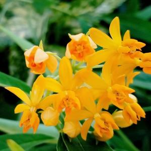 ヤナギトウワタとシモツケのお花…♥
