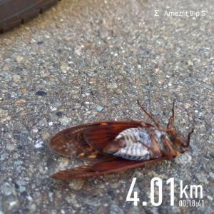 朝ラン4km