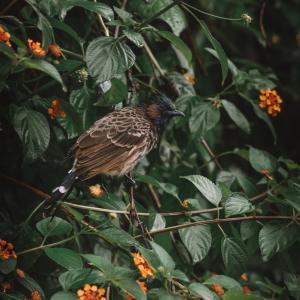 「私の家が巣作りに良い、と野鳥に評判になっているかも」 次々に巣作りされる沖縄の家