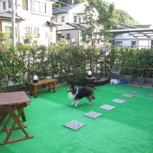 小次郎の生活ードッグラン(Dog run)ー