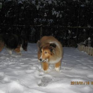 次郎と小次郎と雪 -雪じゃ!2013年-