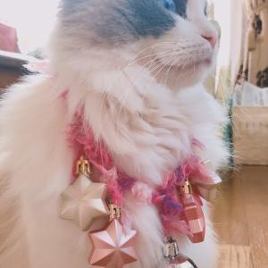 【実体験で】猫に首輪は必要か【語ってみる】