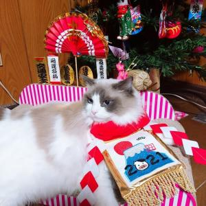 お正月/猫にお節はいかがですか?/応用しまくれるんだぜ
