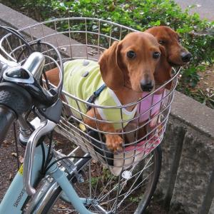 ミント号・初サイクリング