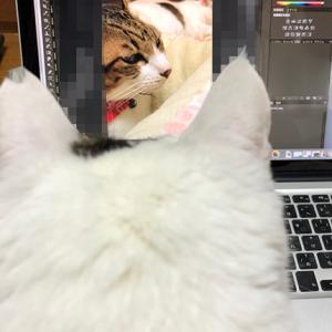 きじしろ、ほっちゃん。PCを見るはなにゃちゃん。