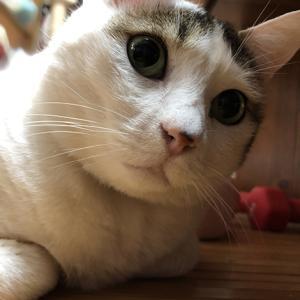 きじしろ、ほっちゃん。気になるネコちゃん。