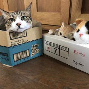 きじしろ、ほっちゃん。猫三びき。
