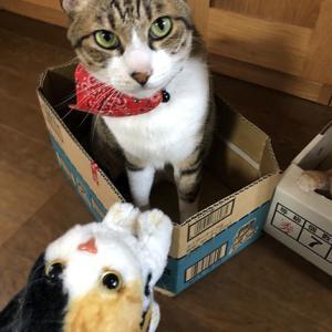 きじしろ、ほっちゃん。猫三びき その2。