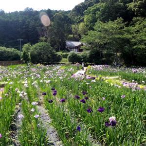 周智郡森町の小國神社と一宮花しょうぶ園