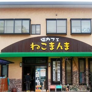 ■猫カフェ【ねこまんま】