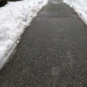 大雪後の現状