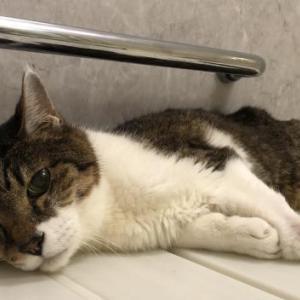 【猫】お風呂に居たがる猫−目的は水か構って欲しいのか
