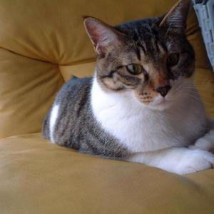 【猫】1歳までの軌跡