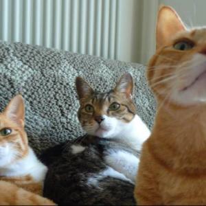 【猫】心に開いた猫型の穴−茶トラ兄妹の月命日