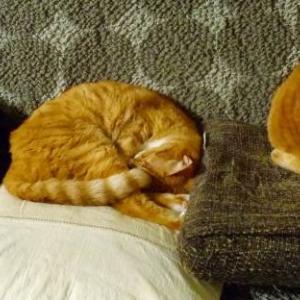 【猫】シンクロするのは猫だけではない