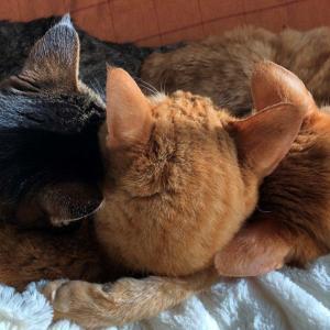 【猫】高齢猫あるある−高齢猫との静かな時間を
