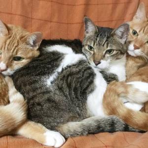 【猫】無猫生活20日経過ー予想以上にダメージあり