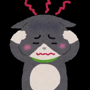 【猫】飼い主の在宅は猫にストレス?