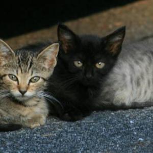 【猫】猫派遣組織『NNN(ねこねこネットワーク)』とは
