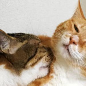 【猫】猫は無表情?いや、そんなことはない