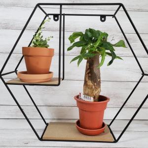 お部屋にグリーンは必要。100均のアイアン棚にGreen plant を置くだけで立派なインテリア。
