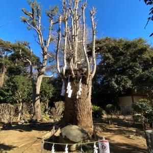 【江ノ島ねえさんぽ⑧いよいよ奥津宮、さまざまな空気やね^^】