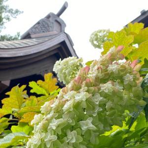 【巡礼ねえさんぽ_φ(・_・ 高幡不動尊さん→八十八ヶ所の紫陽花を見に行くよ^^】