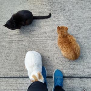 真鍋島(猫島)に行ってきました