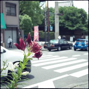 大阪〜上がったり下がったり_その八