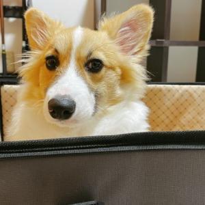ついに到着!危険予防に犬用ドライブボックスを買ってみた【感想レビュー】