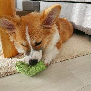 タオル1枚でOK♪手軽に作れる犬用知育おもちゃ