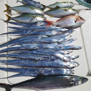 伊勢湾ジギング!ウロコ無き魚はやはり美味い!【タチウオ・サワラ・調理編】