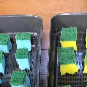 ガーデンレタスと二十日大根を水耕栽培します♪