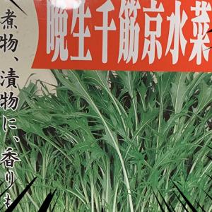 「晩成千筋京水菜」を育ててみるよぉぉぉ!!