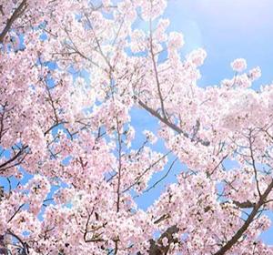 春のペン字講座🌸を受講して