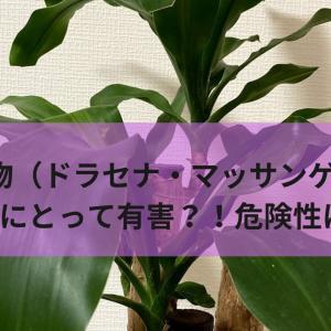 観葉植物(ドラセナ・マッサンゲアナ)は猫にとって有害?!危険性は?