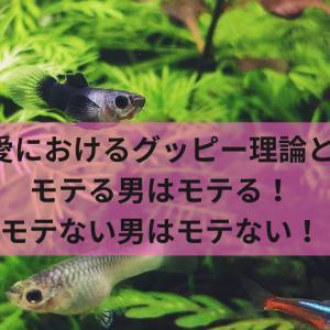 【恋愛におけるグッピー理論とは】モテる男はモテる!モテない男はモテない!