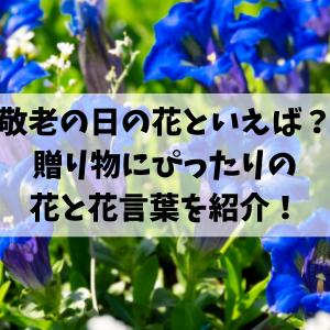 敬老の日の花といえば?定番の花や花言葉を紹介!