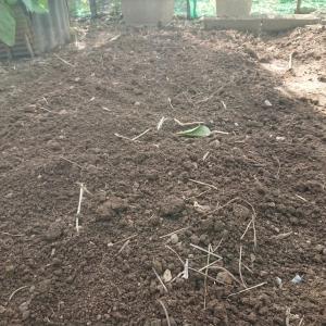 家庭菜園記録【さー植え付けの下準備入りますよ♪】☆