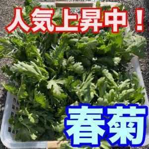 最近人気上昇中の野菜!健康と美容に効果ありの「春菊」