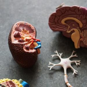 【BrainWorx】脳の発達チェックリスト