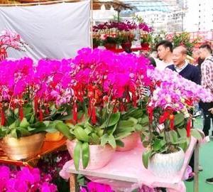 【香港最新情報】「花市、規模を半分にして開催が決定」