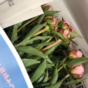 お花に癒されて