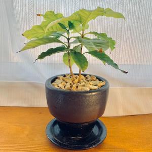 部屋に観葉植物を置く自分なりの理由