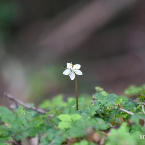 少しずつ春の兆しも?1月の高知県立牧野植物園