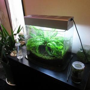 植物「ネフロレピシス・ブルーベル専用の水槽」